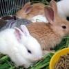 Скільки живуть кролики і від чого це залежить