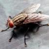 Засоби від мух в будинку народні та хімічні