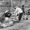 Тіньова економіка: сутність, передумови, структура