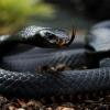 Види змій і їх опис з фото