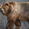Знайомтеся: найбільший в світі ведмідь
